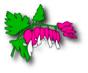 bleeding heart logo